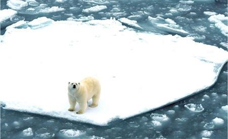 Ein Eisbär auf einer Eisscholle