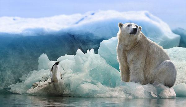 Eisbaer und Pinguin | Bild: Papafox, pixabay.com, CC0 Creative Commons